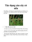 Tác dụng của cây cỏ nến