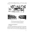 Giáo trình bệnh ký sinh trùng thú y part 3