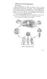 Giáo trình bệnh ký sinh trùng thú y part 6