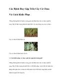 Các Bệnh Hay Gặp Trên Cây Cà Chua Và Cách Khắc Phục