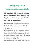 Bằng lăng cườm Lagerstroemia angustifolia