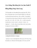 Các Giống Mía Khuyến Cáo Sản Xuất Ở Đồng Bằng Sông Cửu Long