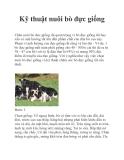 Kỹ thuật nuôi bò đực giống