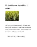 Kỹ thuật bón phân cho lúa vụ hè thu ở ĐBSCL