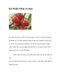 Kinh nghiệm trồng cà chua