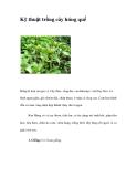 Kỹ thuật trồng cây húng quế