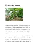 Kinh nghiệm  trồng đậu cove không sâu hại