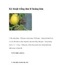 Kỹ thuật trồng dưa lê hoàng kim