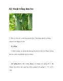 Kỹ thuật trồng dưa leo