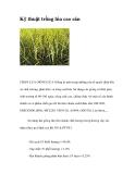 Kỹ thuật trồng lúa cao sản