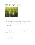 Kỹ thuật trồng lúa cực sớm