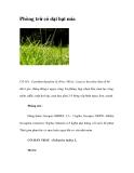 Phòng trừ cỏ dại hại mía
