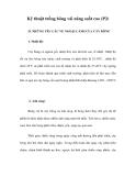 Kỹ thuật trồng bông vải năng suất cao (P2)