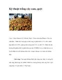 Kỹ thuật trồng cây cam, quýt