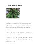 Kinh nghiệm trồng cây đu đủ