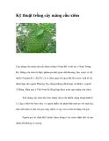 Kỹ thuật trồng cây mãng cầu xiêm