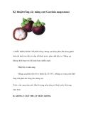 Kinh nghiệm trồng cây măng cụt (Garcinia magostana)