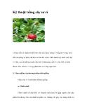Kỹ thuật trồng cây sơ ri