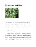Kỹ thuật trồng đậu Hà Lan