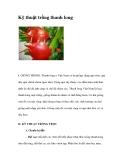 Kinh nghiệm trồng thanh long