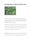 Kinh nghiệm trồng và chăm sóc bưởi da xanh