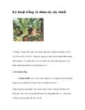 Kinh nghiệm  trồng và chăm sóc cây chuối