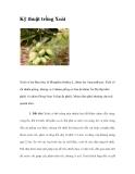 Kinh nghiệm trồng cây Xoài