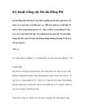 Kỹ thuật trồng cây Đu đủ Hồng Phi