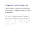Trồng nhãn tiêu da bò chú ý đạm và kali(Dân Việt)