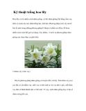 Kinh nghiệm trồng hoa lily
