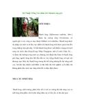 Kỹ Thuật Trồng Và Chăm Sóc Thanh Long (p1)