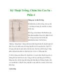Kỹ Thuật Trồng, Chăm Sóc Cao Su Phần 4