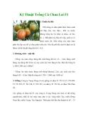 Kinh nghiệm trồng Cà Chua Lai F1