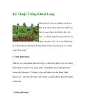 Kinh nghiệm trồng cây khoai Lang