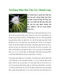 Sử Dụng Phân Bón Cho Cây Thanh Long