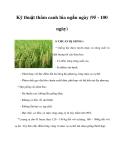 Kỹ thuật thâm canh lúa ngắn ngày (95 - 100 ngày)