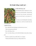 Kỹ thuật trồng cà phê (p1)