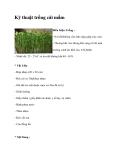 Kỹ thuật trồng cải mầm