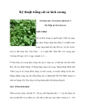 Kinh nghiệm trồng cải xà lách xoong