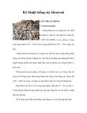 Kỹ thuật trồng cây khoai mì cho năng suất cao