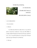 Kinh nghiệm trồng cây thanh long