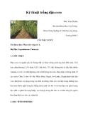 Kinh nghiệm trồng đậu cove