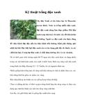 Kinh nghiệm  trồng đậu xanh