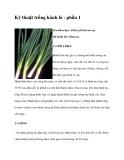Kinh nghiệm trồng hành lá
