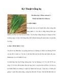 Kinh nghiệm trồng hẹ
