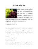 Kinh nghiệm  trồng Nho