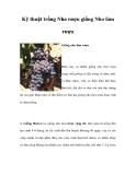 Kinh nghiệm  trồng Nho rượu giống Nho làm rượu