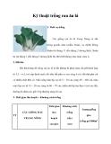 Kinh nghiệm trồng rau ăn lá