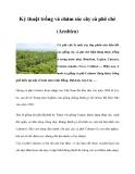 Kỷ thuật trồng và chăm sóc cây cà phê chè (Arabica)