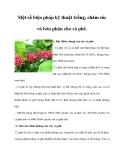 Một số biện pháp kỹ thuật trồng, chăm sóc và bón phân cho cà phê